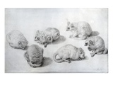 Studies of a Lemur, 1773 (Graphite on Paper) Giclee Print by George Stubbs