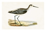 Marsh Sandpiper,  from 'A History of the Birds of Europe Not Observed in the British Isles' Giclee Print by  English