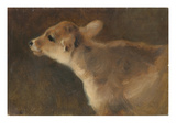 A Calf, 1879 Giclee Print by George Wiliam Horlor
