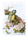 Blue Tit Giclee Print by  English