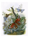 The Butterfly Vivarium Giclee Print by  English
