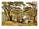 Cedars of Lebanon Giclee Print by  English