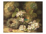 Primroses and Bird&#39;s Nests on a Mossy Bank, 1882 (Oil on Canvas) Giclee Print by Oliver Clare