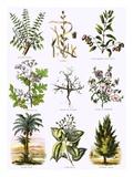 Biblical Natural History Premium Giclee Print by  English