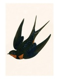 Oriental Chimney Swallow Giclee Print by  English