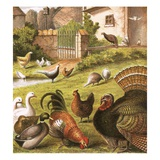 Poultry at a Farm Reproduction procédé giclée par  English