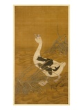 Swan Goose Among Water Reeds (Ink and Colour on Silk) Giclee Print by  Chinese