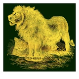 The Lion, Illustration from J. G. Wood's 'Illustrated Natural History', Published C.1850 Giclée-Druck von  English