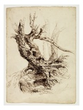 Gnarled Tree Trunk, C.1826 (Pen and Brown Ink over Graphite Pencil on Cream Wove Paper) Giclée-tryk af Thomas Cole