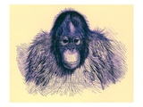 Head of Orang, Illustration from 'The Royal Natural History', Published 1896 Premium Giclee Print by  English