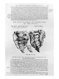 Vertebrae, Cocyx (B/W Print) Giclée-Druck von Andreas Vesalius
