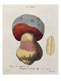 Tubiporus Cepa, Plate 176 from 'Iconographie Des Champignons De J.J. Paulet' by J. H. Leveille Giclee Print by  Fossier