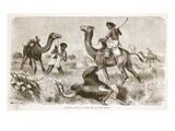 Ostrich Hunting- the End of the Chase Giclee Print by  English
