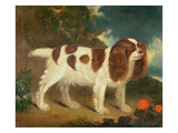 King Charles Spaniel Giclee Print by William Thompson