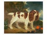 King Charles Spaniel Premium Giclee Print by William Thompson