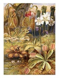 A Group of Carnivorous Plants, Illustration from 'Wonders of Land and Sea' by Graeme Williams Giclee Print by Theobald Carreras