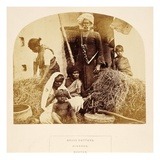 Grass Cutters, Hindoos, Madras, from 'The People of India', by J. Forbes Watson, Published 1868 Giclee Print by  English Photographer