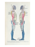 Fig. 381 and 382 the Nervous System Giclee Print by  French