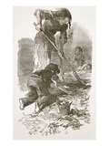Searching for Potatoes in a Stubble Field, from 'The Illustrated London News', 1849 (Engraving) Giclee Print by  English