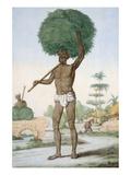 Hindu Servant Cutting Grass Giclee Print by Franz Balthazar Solvyns