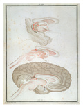 Cross-Section of the Brain, from 'Traite D'Anatomie Et De Physiologie' by Felix Vicq D'Azyr Giclee Print by Alexandre Briceau