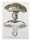 Tubiporus Esculentus, Plate 168 from 'Iconographie Des Champignons De J.J. Paulet' Giclee Print by  De Lussigny