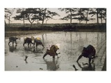 Five Peasants Re-Planting Rice in a Paddy Field (Hand Coloured Photo) Giclee Print by  Japanese Photographer