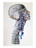Veins and Arteries in the Head Giclee Print by Antoine Chazal
