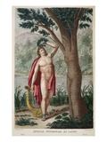 Apollo with Laurel, Illustration from Ovid's Metamorphoses, Florence, 1832 Giclee Print by Luigi Ademollo