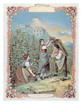 Harvesting Grapes, from a Calendar, C.1880 (Colour Litho) Giclee Print by  French