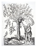 Printer's Emblem of Robert Estienne, Paris, 1526 (Woodcut) Giclee Print by  French