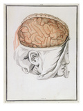 The Brain, from 'Traite D'Anatomie De Cerveau' by Felix Vicq D'Azyr (1748-94) 1786 Giclee Print by  Allais