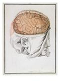 The Brain, from 'Traite D'Anatomie De Cerveau' by Felix Vicq D'Azyr (1748-94) 1786 Premium Giclee Print by  Allais