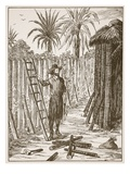 Robinson Crusoe Building His Bower Giclee Print by  English