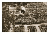 The Prisoners' Gardens, Dorchester, Illustration from 'German Prisoners in Great Britain' Giclee Print by  English Photographer
