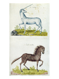Drawings of a Unicorn and a Wild Horse (W/C on Paper) Premium Giclee Print by  French