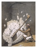 Carding Cotton from &#39;Voyages Aux Indes Et a La Chine&#39;, 1782 (Coloured Engraving) Reproduction proc&#233;d&#233; gicl&#233;e par Pierre Sonnerat