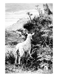 Illustration from 'Mr. Seguin's Goat' by Alphonse Daudet (Engraving) Giclee Print by  French