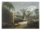 A Tiger Prowling Through a Village (Cattle in Terror), from 'Oriental Field Sports' Giclee Print by Samuel Howett