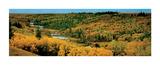 Lone Pine, Cypress Hills, Saskatchewan Art by Dermot O'Kane