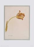 Gran Jupiter Collectable Print by Jakob Huysum