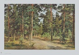Pine Forest Collectable Print by Iwan Iwanowitsch Schischkin