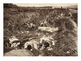 Battlefield at Reims with Fallen Senegalese Soldiers (B/W Photo) Giclee Print by  German photographer