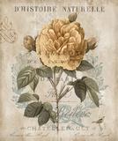 Botanique II Posters por Deborah Devellier