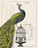 Peacock Birdcage I Posters by Sue Schlabach