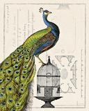 Riikinkukko ja lintuhäkki Julisteet tekijänä Sue Schlabach