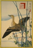 Snipe, Smooth Cane and Morning Glory Affiches par Sugakudo