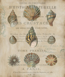 Shell Collection I Posters by Deborah Devellier