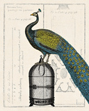 Peacock Birdcage II Prints by Sue Schlabach