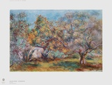 Olive Grove Collectable Print by Pierre-Auguste Renoir